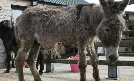 donkey-op